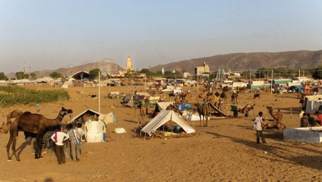1023_Pushkar-camel-fair-0.jpg