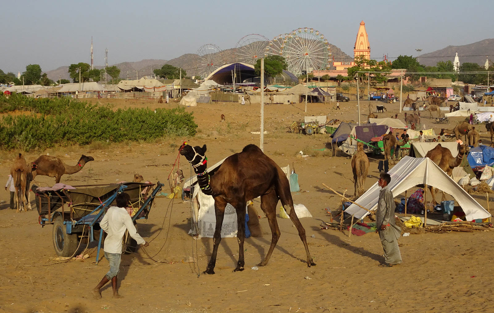 1023_Pushkar-camel-fair-1.jpg
