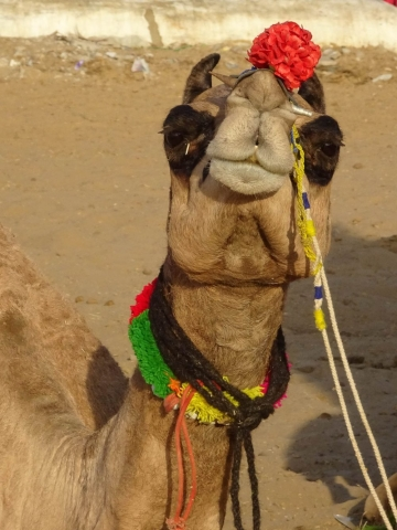 1023_Pushkar-camel-fair-39.jpg