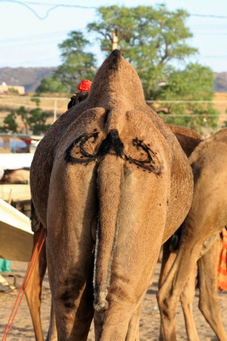1023_Pushkar-camel-fair-48.jpg