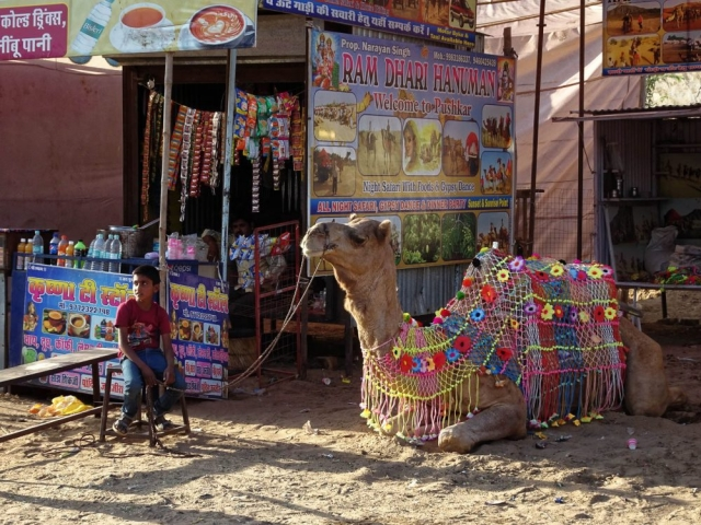 1023_Pushkar-camel-fair-7.jpg