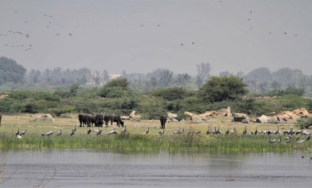 1102_Dwarka-birds-1.jpg