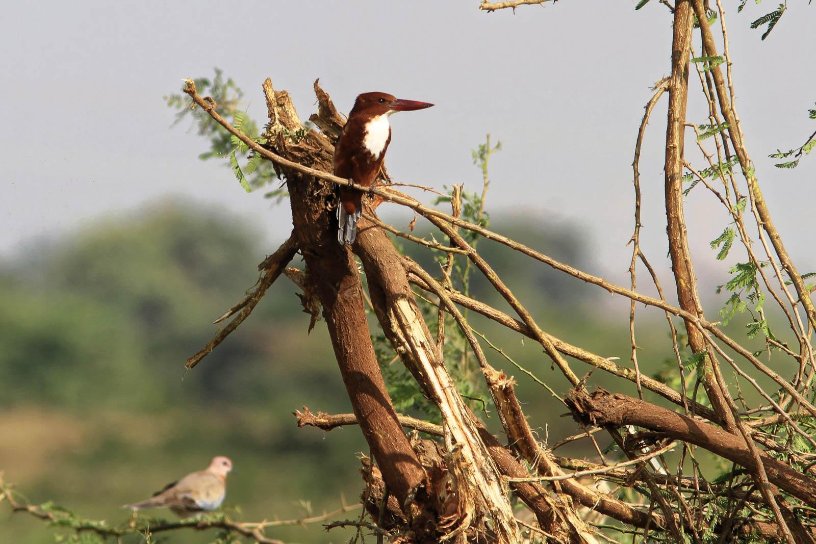 1102_Dwarka-birds-109.jpg