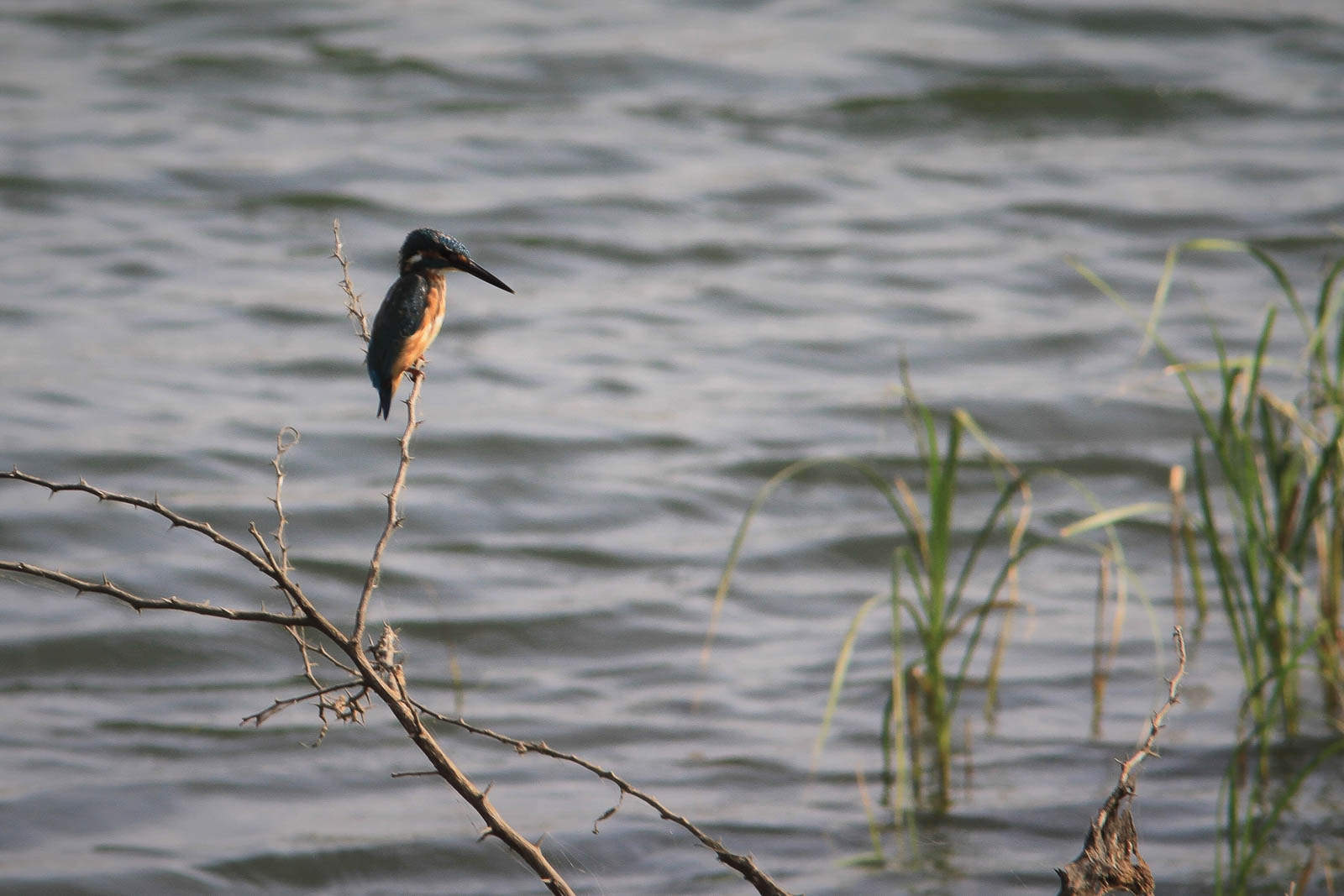 1102_Dwarka-birds-110.jpg