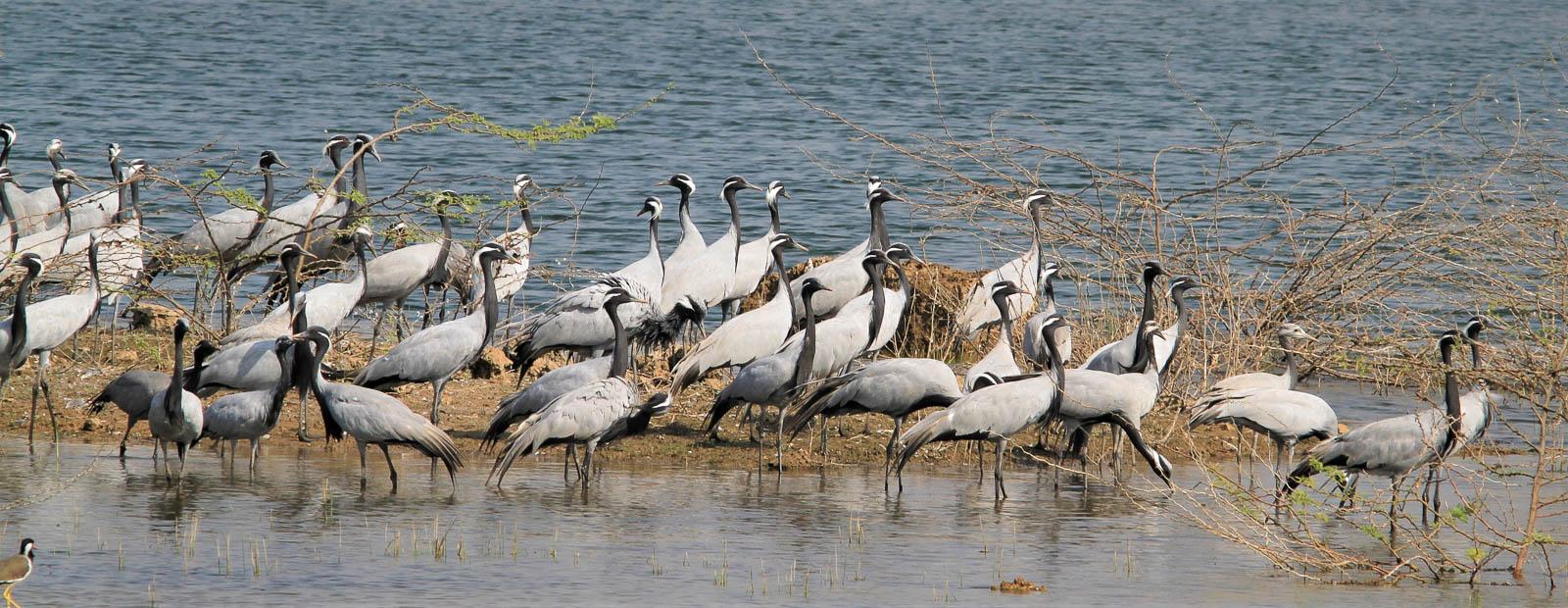 1102_Dwarka-birds-111.jpg
