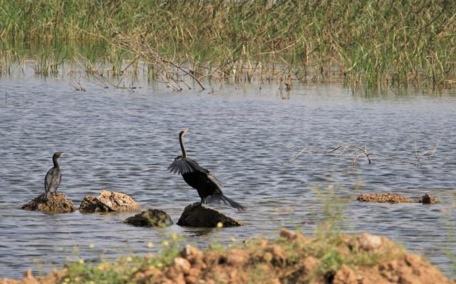 1102_Dwarka-birds-112.jpg