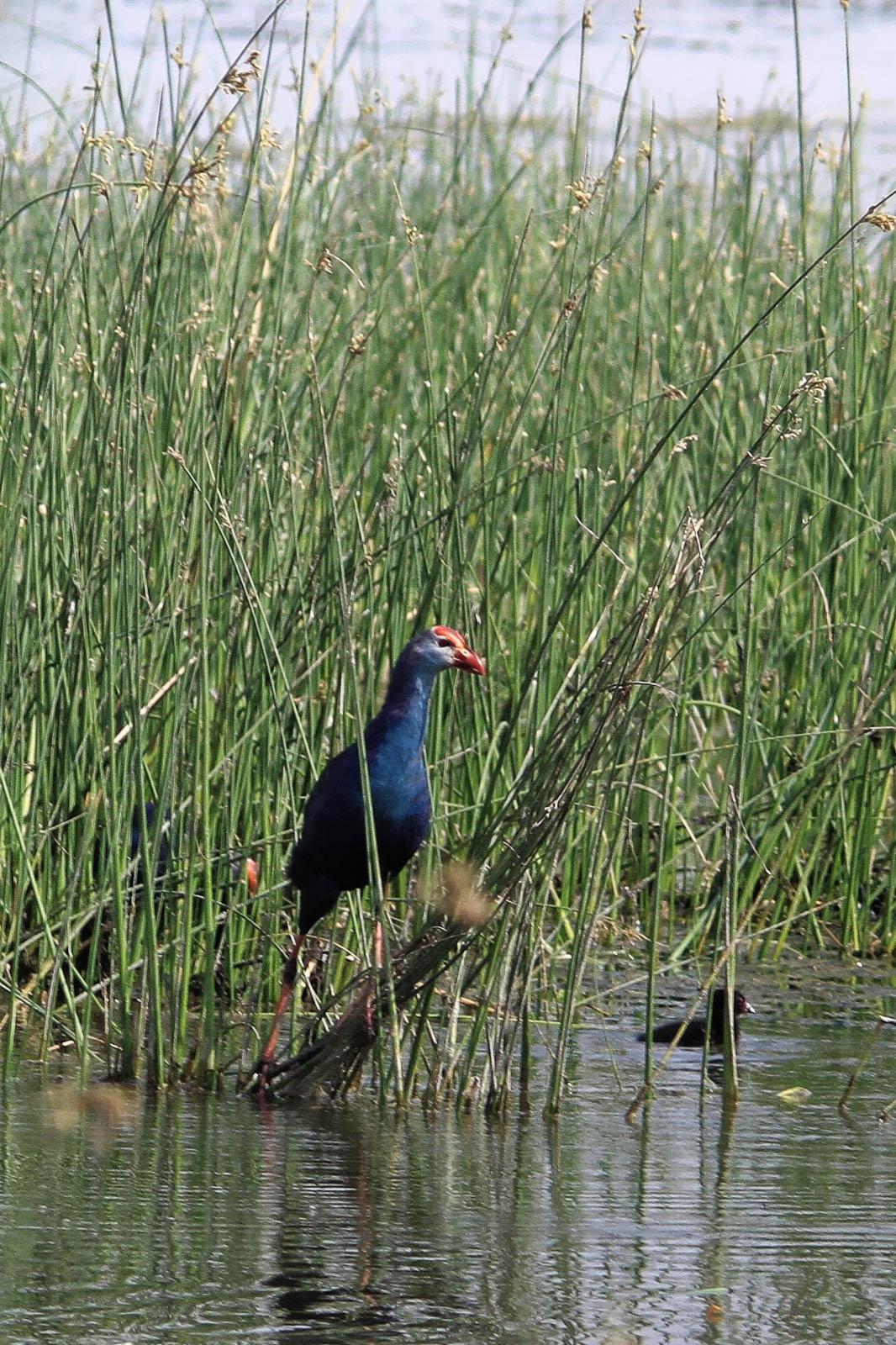 1102_Dwarka-birds-7.jpg