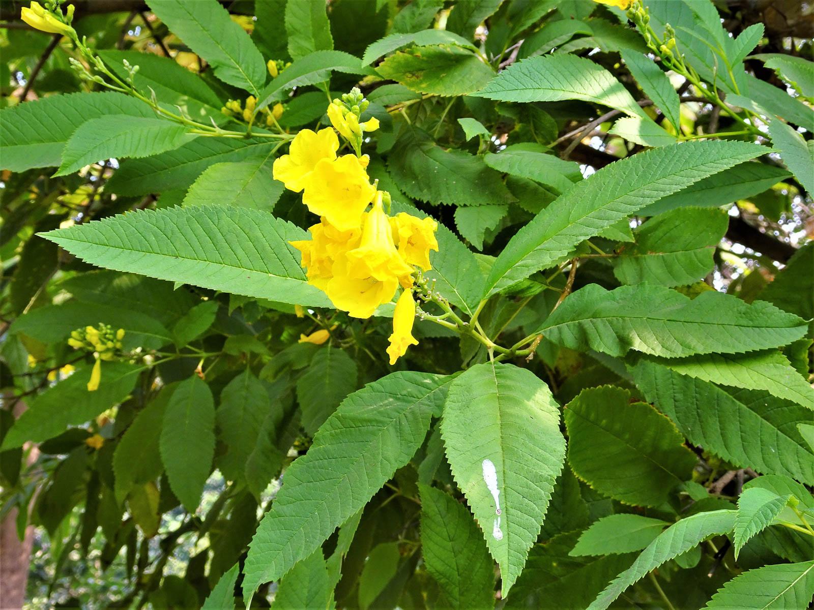 1022_Buddha-Jayanti-Park-4.jpg