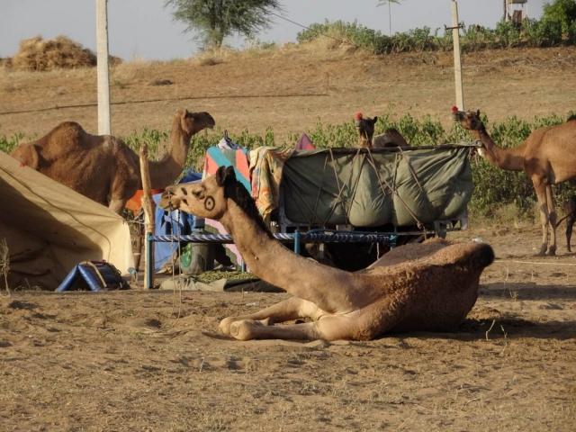 1023_Pushkar-camel-fair-31.jpg
