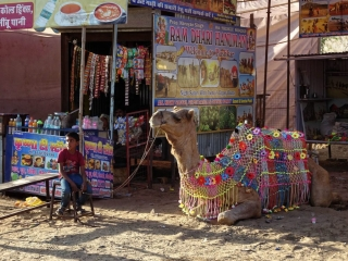 1023_Pushkar-camel-fair-7.jpg