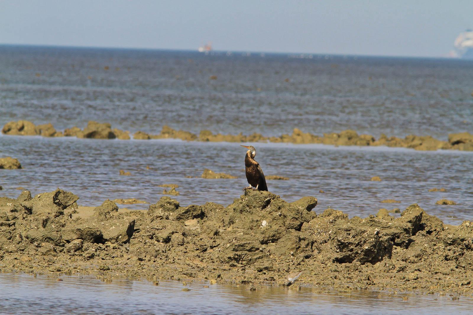 1031_Narara-Marine-reserve-97.jpg