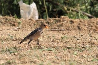 1102_Dwarka-birds-108.jpg