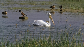 1102_Dwarka-birds-121.jpg