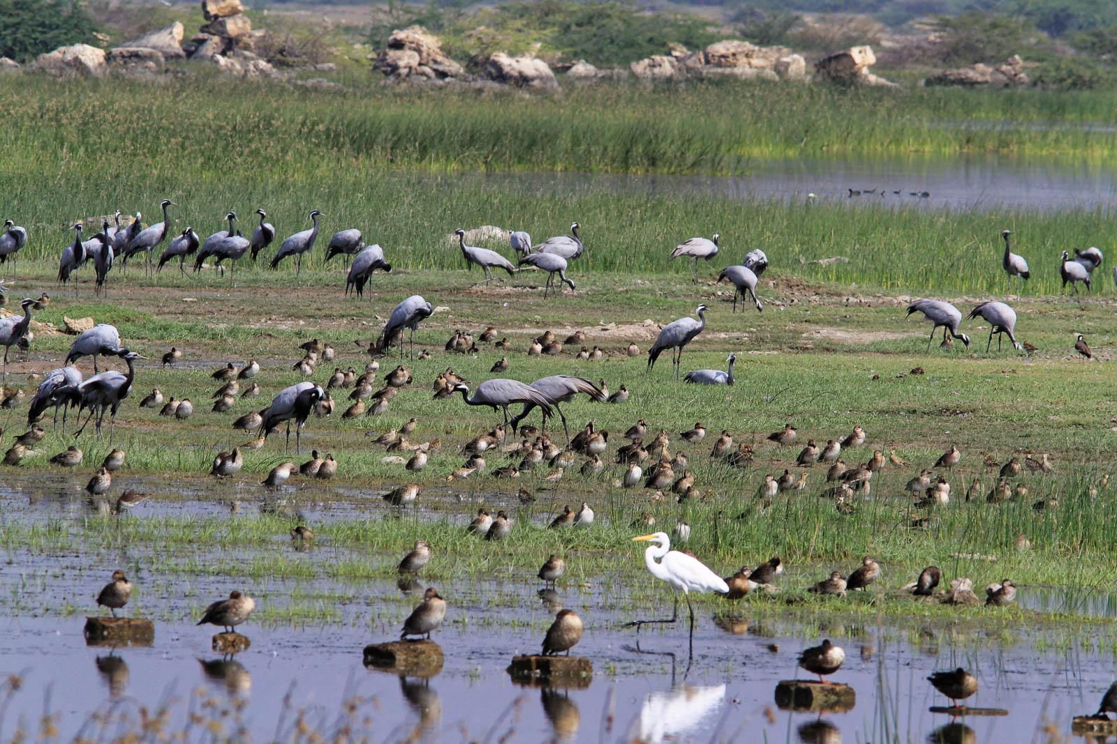 1102_Dwarka-birds-2.jpg