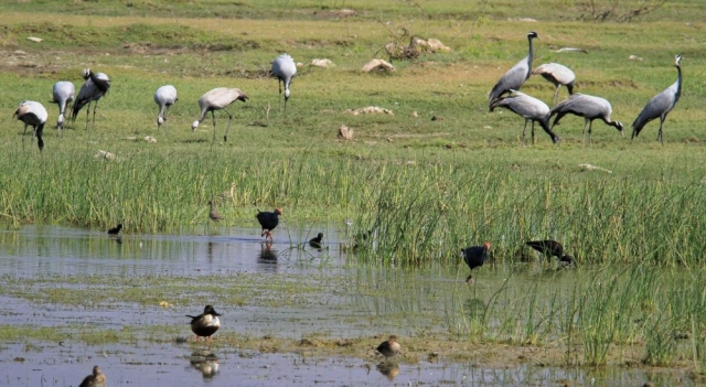 1102_Dwarka-birds-3.jpg