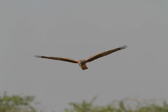 1107_Velavadar-safari-1.jpg