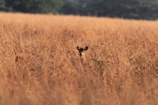 1107_Velavadar-safari-13.jpg