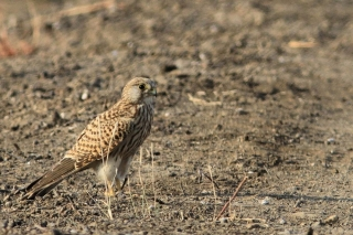 1107_Velavadar-safari-21.jpg