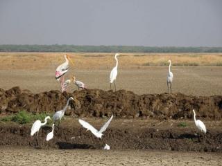 1107_Velavadar_Painted-Stork-2.jpg
